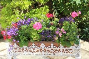 Summer garden flower inspiration